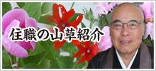 ド住職の山草紹介